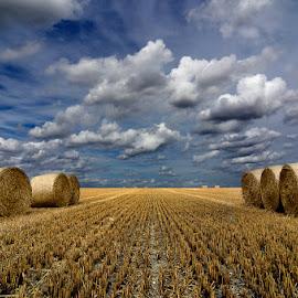 Alpacas redondas 15 by Eduardo Menendez Mejia - Landscapes Prairies, Meadows & Fields ( redondas, nikoin, paja, tokina 12-24, cambridgeshire, hay, alpacas, menendez, eduardo, d5100, cambridge )