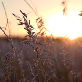 Of Light and Leaves #3 by Brandon Engel - Nature Up Close Leaves & Grasses ( omaha, grassland, grass, sunset, nebraska,  )