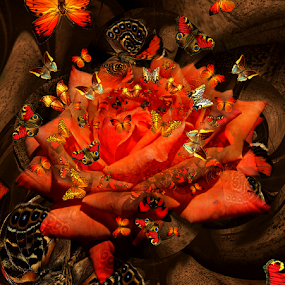 ESCAPE by Carmen Velcic - Digital Art Abstract ( abstract, orange, red, roses, flowers, digital, buttrefly )