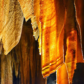 #DiscoveryADay - Stalactite by Kaushik Datta - Landscapes Caves & Formations