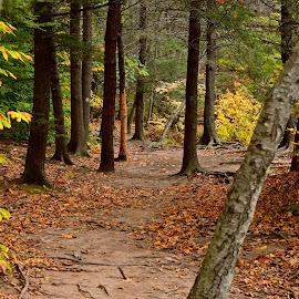 Autumn Trail by Carl Testo - Landscapes Forests ( autumn, trail, sleeping giant )