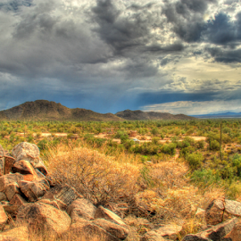 West of Tucson by Sean Doran - Landscapes Deserts ( native, arizona, tucson, storm, rain, cactus )