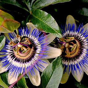 by Željko Oskoruš - Flowers Flowers in the Wild