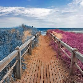 Split Tone Beach Boardwalk - Blue & Pink by Nicolas Raymond - Landscapes Beaches ( railing, colorful, ocean, vibrant, beach, sandy, landscape, atlantic, boardwalk, prince edward island, fantasy, colourful, sky, nature, tones, cloudy, pink, surreal, split-tone, clouds, orange, sand, tone, canada, maritimes, colors, ethereal, sea, scenic, toned, colours, basin head, blue, scene, brown, split, scenery, , Beach, sunset, water, ocean.  )