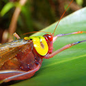 False Rainbow Katydid