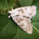 Moth. Polilla