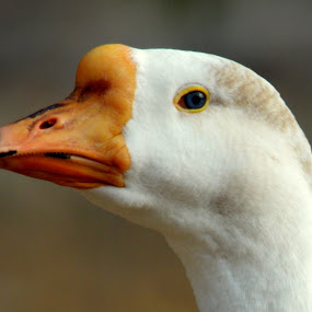 by Varun Jain - Animals Birds