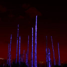 deadwood by David Ubach - Landscapes Forests ( purple, burnt, forest, dead )