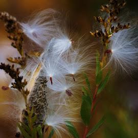 by Lori Kulik - Nature Up Close Other plants ( plant, up close, nature )