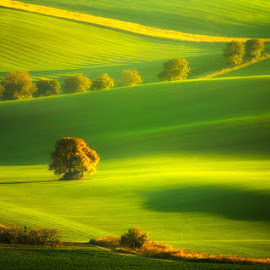 Autumn in Moravia by Pawel Uchorczak - Landscapes Mountains & Hills ( autumn in moravia, czech, best, light, top )