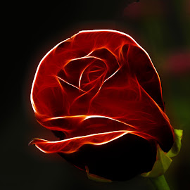 A Rose by Danny Long - Digital Art Things ( rose, red, nature, flora, colorful, color, beautiful, flowers, flower )