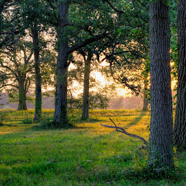 Appleton Trees at Sunrise by David Stone - Landscapes Forests ( appleton farm, ipswich, tree trunks, textures, trees, sunrise )