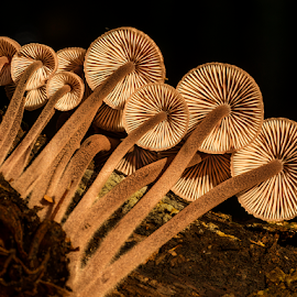 Fungis in morning light by Peter Samuelsson - Nature Up Close Mushrooms & Fungi