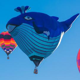Balloon Blue Whale by Richard Duerksen - News & Events Entertainment ( balloon fiesta, albuquerque, balloons )