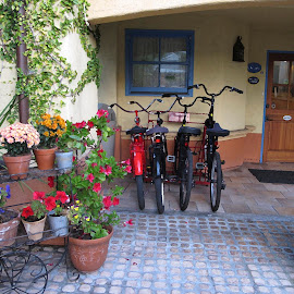 family of 4 by Leslie Hunziker - Transportation Bicycles ( bicycles, yard, transportation, garden )