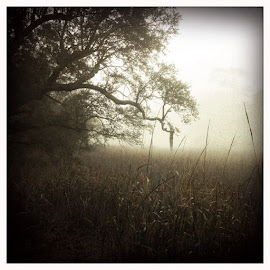 # tree by Wendy Garfinkel-Gold - Nature Up Close Trees & Bushes ( charleston, oak, fog, Hipstamatic, Oggl, Libatique73, Blanko )