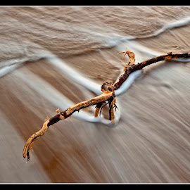 Driftwood by Ian Pinn - Landscapes Beaches ( wood, wave, branch, beach, coast )