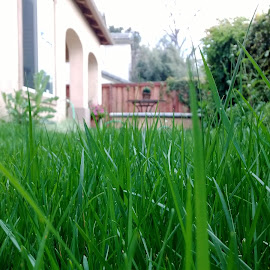 Greenery up close by Ananthan Unni - Nature Up Close Leaves & Grasses ( nature, grass, green, backyard )