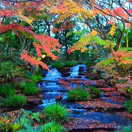 Koko-En Garden by Curly Yanni - Nature Up Close Gardens & Produce ( koko-en, garden, himeji )