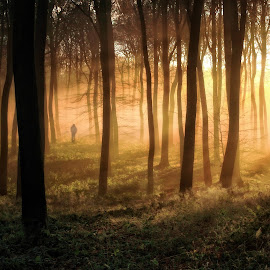 Woodland Dawn by Ceri Jones - Landscapes Forests ( winter, trees, forest, woods )