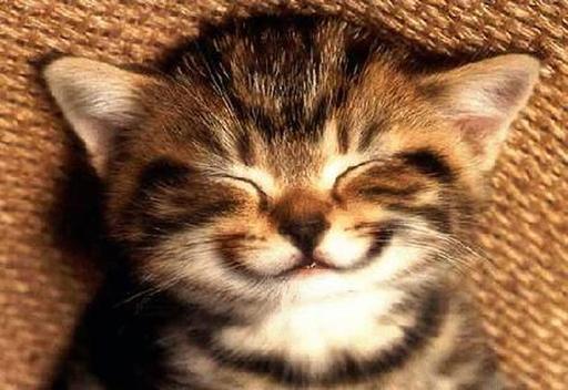 Šypsokis