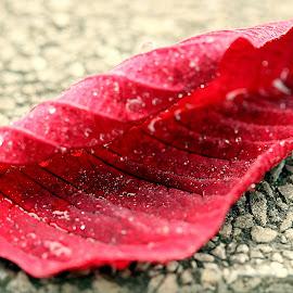 by Biljana Nikolic - Nature Up Close Leaves & Grasses (  )