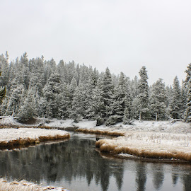 Winter Blanket by Laura Gardner - Landscapes Forests ( water, yellowstone, winter, peaceful, snow, white, trees, still, landscape )