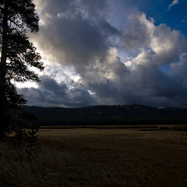 LACEY MEADOW MORNING by Sam Okamoto - Landscapes Cloud Formations ( clouds, webber lake, sierra nevada, meadow, forest )