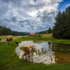 At the mountain pond by Stanislav Horacek - Landscapes Prairies, Meadows & Fields