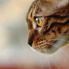 by Jane Bjerkli - Animals - Cats Portraits (  )
