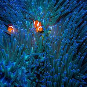 Diving Bunaken by Edwin Kosasih - Animals Fish