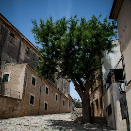 Lone Tree by Werner Booysen - Buildings & Architecture Other Exteriors ( building, tree, pollenca, street, mallorca, werner booysen )