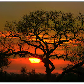 Satara Sunset by Anthony Goldman - Landscapes Sunsets & Sunrises ( satara, nature, sunet, landscape,  )