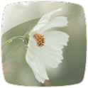 Wild Flowers Theme *New* icon