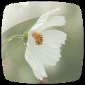 Wild Flowers Theme *New* icon