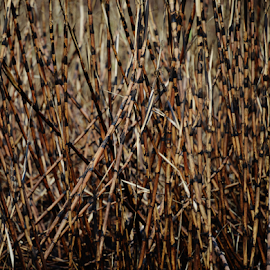 Sugar cane by Marcello Toldi - Abstract Patterns