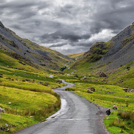 Lake District - Honister Pass by Lukas Proszowski - Landscapes Mountains & Hills ( hill, england, nature, green, street, road, lake district, path, landscape )