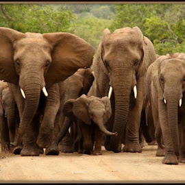 Family unity by Romano Volker - Animals Other Mammals