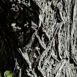 Weathered Wood by Cheryl Petretti - Nature Up Close Trees & Bushes ( gnarly )