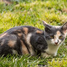 by Linda McBride - Animals - Cats Kittens