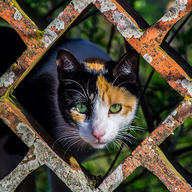 The Cat by Diogo Narciso - Animals - Cats Kittens ( gatinhos, cat, the cat, animais, gatos )