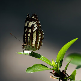 the right light by Roger van Zandvoort - Animals Insects & Spiders