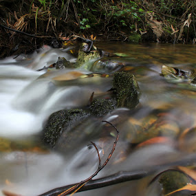 Water by Gil Reis - Nature Up Close Water ( water, forests, life, bio, nature, stone, portugal,  )
