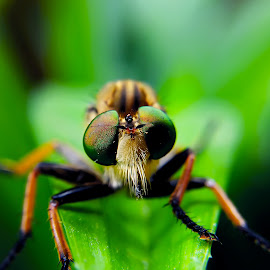 Look at My Eyes by Rizki Irfansyah - Instagram & Mobile Android ( beautiful eyes, eyes, robber fly, robberfly )