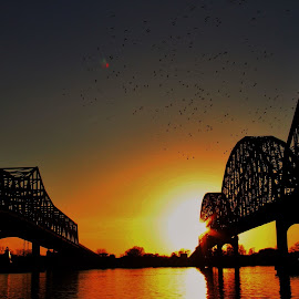 Birds, Bridges, Sunsets, OH My by Zeralda La Grange - Landscapes Sunsets & Sunrises ( #landscape, #bridge, #nature, #birds, #sunset, #water,  )