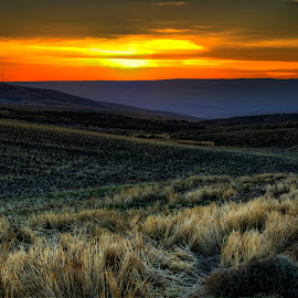Dryland Sunset by Jennifer Gilfillan - Landscapes Sunsets & Sunrises ( wheat, harvested, dryland, sunsets, sunset, night, harvest, evening, drylands )