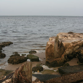 sit spot 1 by Eric Rainbeau - Nature Up Close Rock & Stone ( shore, water, bay, florida, rainbeau, rocks )
