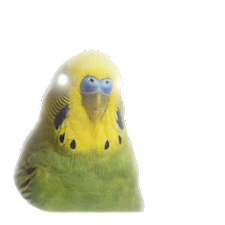 Flashlight Budgie