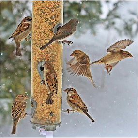 by Kevin Callahan - Animals Birds