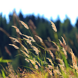 straw in the wind by Mona Martinsen - Nature Up Close Leaves & Grasses